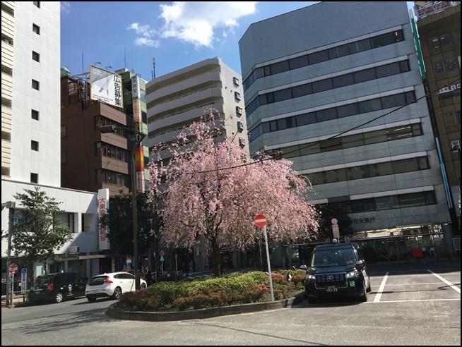 koenjisakura 高円寺駅前の桜