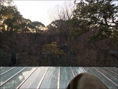 庭の湯景色