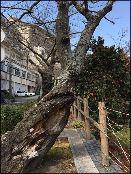 treeroad