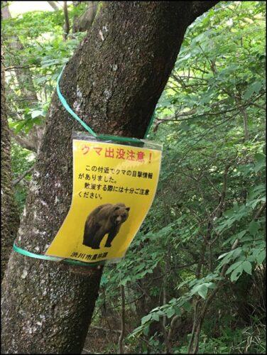 kumasyutsubotsu 熊出没注意